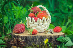 Basket with strawberries and a snail is on the stump Stock Image