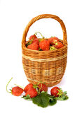 Basket with strawberry. Fresh strawberry in wicker basket stock photo