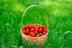Basket with strawberry Stock Images