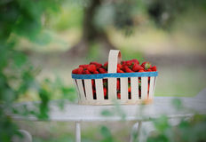 Basket with the strawberry. On the table Stock Images