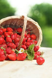 Basket with strawberry Stock Photography