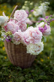Basket with summer flowers on blured natural background. Basket with summer garden flowers on blured natural background Stock Photos