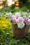 Basket with summer flowers in the field in sunset light Stock Photos