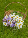 Basket with summer wild flowers Stock Photography