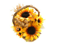 Basket of sunflowers. On a white background Royalty Free Stock Images