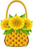 Basket sunflowers Stock Image