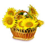 Basket of sunflowers Royalty Free Stock Image