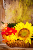 Basket with sunflowers and daisies Royalty Free Stock Photography