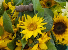 Basket of Sunflowers Royalty Free Stock Photo