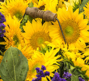 Basket of Sunflowers Royalty Free Stock Image