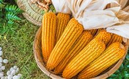 A basket of sweet corn Royalty Free Stock Image