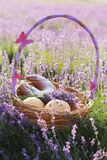Basket with sweet-stuff in purple lavender flowers. Beautiful basket with purple ribbon and butterfly and sweet-stuff in meadow of lavender flowers Stock Photo