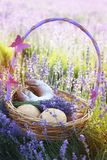 Basket with sweet-stuff in purple lavender flowers. Beautiful basket with purple ribbon and butterfly and sweet-stuff in meadow of lavender flowers Stock Image