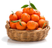 Basket of tangerines. Tangerines with leaves in big  wicker basket  over white background Royalty Free Stock Image