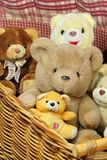 Basket of teddy bears Stock Photos