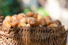 A basket of toasted hazelnuts Royalty Free Stock Photos