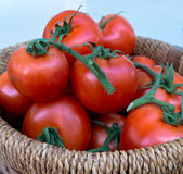 Basket of Tomatoes (1). Fresh Tomatoes on Vine in Basket Royalty Free Stock Photos