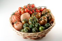Basket of tomatoes Royalty Free Stock Photo