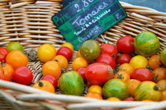 Basket of tomatoes Royalty Free Stock Image