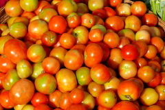 Basket of tomatoes. Fresh juicy tomatoes kept in a basket for sell in a village in India. The tomato is now grown worldwide for its edible fruits, with thousands Stock Photography