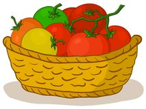 Basket with tomatoes. Wattled basket with various fresh raw tomatoes Royalty Free Stock Images
