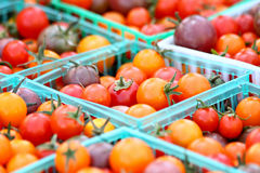 Basket of Tomatoes Royalty Free Stock Photography