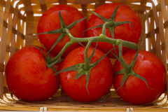 A basket of tomatoes with a sprig Stock Photos