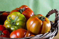 Basket with tomatoes Royalty Free Stock Photos