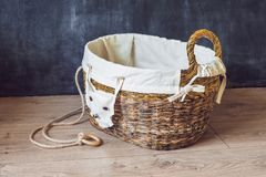 A basket for toys made from old newspapers. zero waste Stock Image