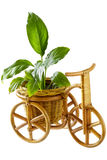 Basket - Tricycle (clipping path) Royalty Free Stock Photos