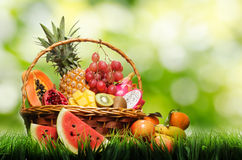 Basket of tropical fruits on green grass Stock Photos