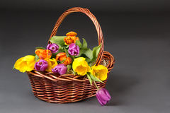 Basket with tulip flowers over grey Royalty Free Stock Photos