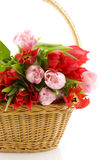 Basket with tulips Stock Photo