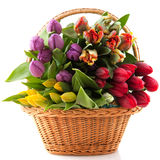 Basket tulips Stock Image