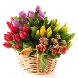 Basket Tulips Stock Photography