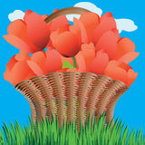 Basket of tulips Royalty Free Stock Photo