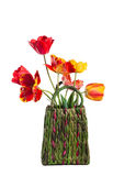 Basket with tulips Stock Photography