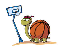 Basket turtle Royalty Free Stock Image