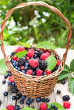 Basket of various berries Stock Photography