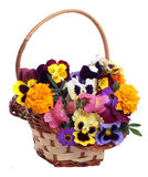 Basket of various flowers Royalty Free Stock Photos