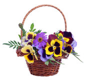 Basket of various flowers Stock Image