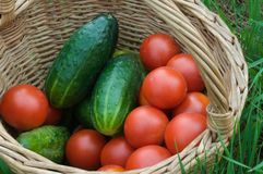 Basket with Vegetable stock photography