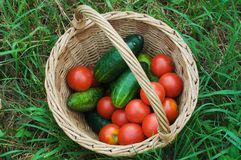 Basket with Vegetable Stock Photos