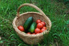 Basket with Vegetable Stock Photo