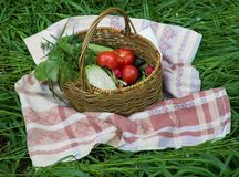 Basket with vegetables. On a grass royalty free stock photos