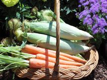 Basket Of Vegetables Royalty Free Stock Photography