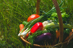 Basket with vegetables royalty free stock photos