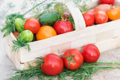 Basket with vegetables decorated with dill. Basket with red, yellow tomatoes and cucumbers decorated with dill Royalty Free Stock Photography