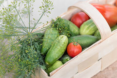 Basket with vegetables decorated with dill Stock Photos
