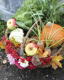 Basket with vegetables and fruits Royalty Free Stock Image